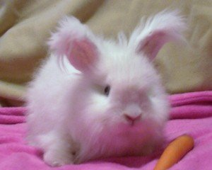 fluffy-rabbit