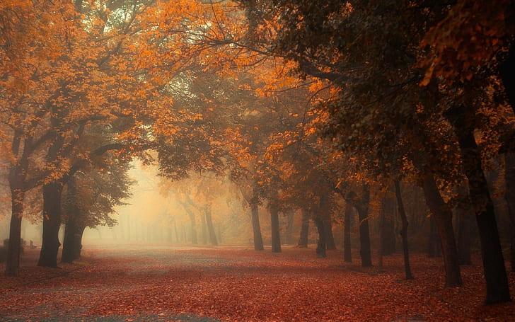 Αυτή η εικόνα δεν έχει ιδιότητα alt. Το όνομα του αρχείου είναι nature-landscape-fall-mist-trees-morning-park-road-leaves-red-orange-tunnel-wallpaper-preview.jpg