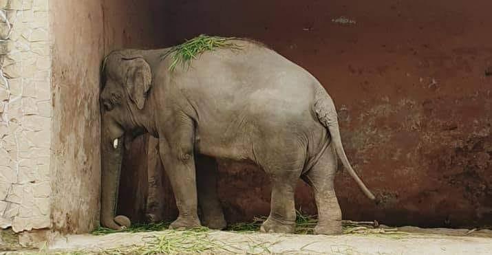 Αυτή η εικόνα δεν έχει ιδιότητα alt. Το όνομα του αρχείου είναι elephant.jpg