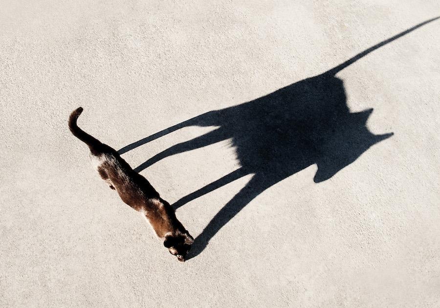 Αυτή η εικόνα δεν έχει ιδιότητα alt. Το όνομα του αρχείου είναι shadow-photography-tips-16.jpg